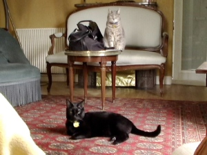 kitties in living room