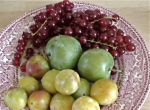 mirabel, prince plums, currents
