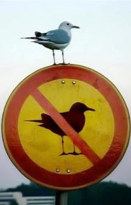 f***cking gulls